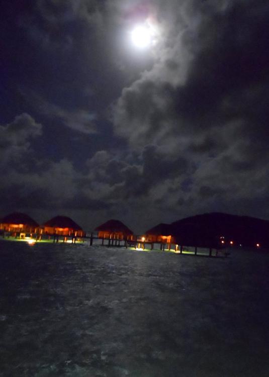 pearl beach 16
