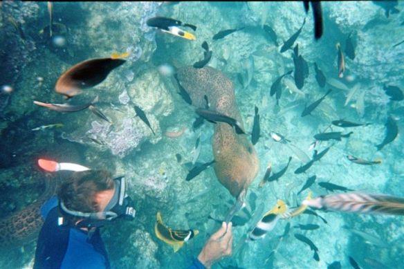 moray eel 1